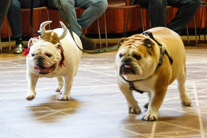Charmin (on left, with official opera headgear) and Milton will be in The Barber of Seville